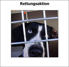 Schlittenhunde Rettungsaktion