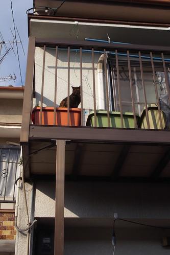 Today's Cat@20091120
