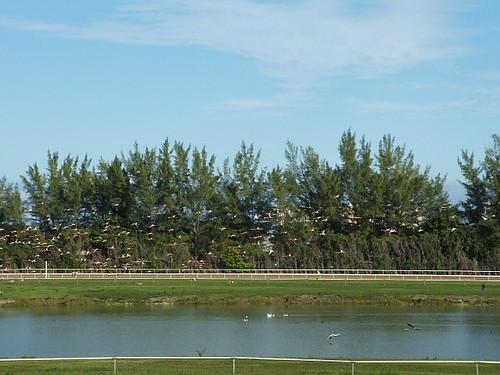 Flamingos Take Flight