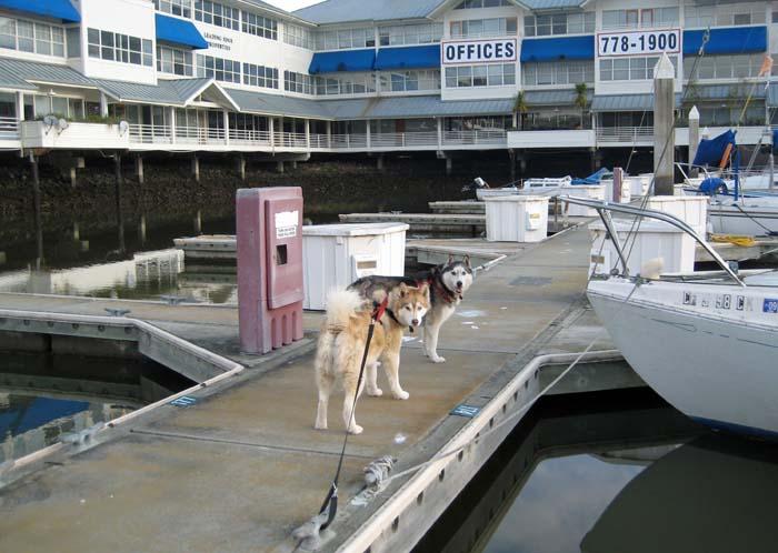 Marina Dogs