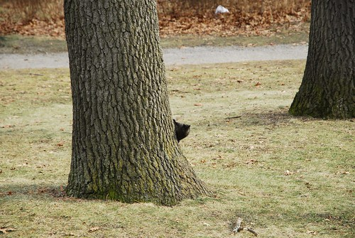 High Park Squirrels