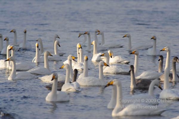 Crowded Lake