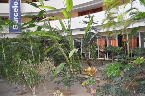 Vegetación en el interior del Hotel