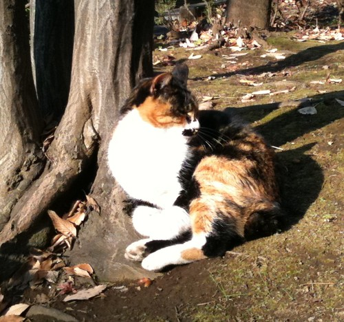 六本木の猫
