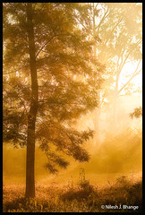 Mist & Tree (bnilesh) Tags: morning sunlight india mist cold tree nature beautiful grass sepia landscape warm natural foliage sunbeam pachmarhi