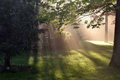 Morning Sun (blmiers2) Tags: morning pink trees light sun sunlight mist newyork green nature grass leaves fog pine yard spring maple backyard nikon shadows explore dew rays sunbeam morningsun saveearth d3100 blm18 blmiers2