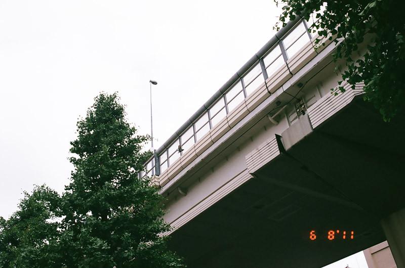 pigeonlove (2 of 13)