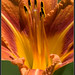 Helicon Focus Flower Macro Composite
