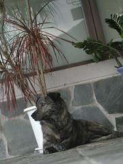 P1010606 (JiminBass) Tags: dog taiwan olympus c4040z