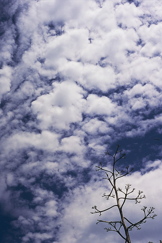 branch cloud sky