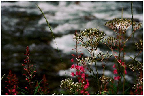 Flowers at the waterfall