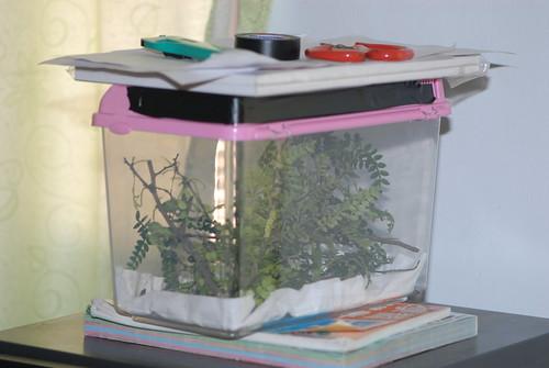幼蟲飼養箱