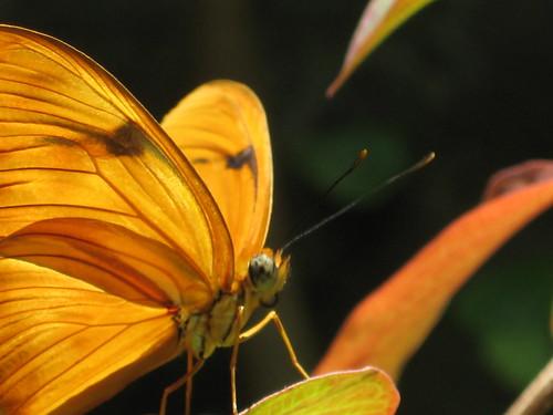 Butterfly Garden 011