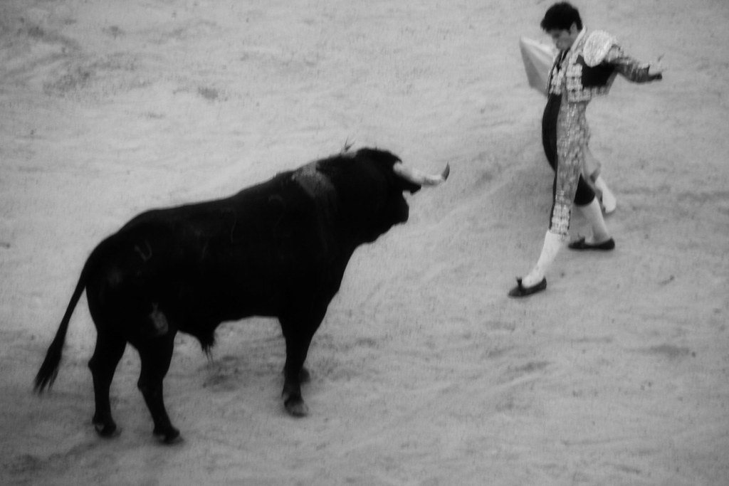 bull fight- come and get it