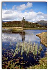 LFG (Dave Hilditch Photography) Tags: mountains water reeds landscape lakes lakedistrict hills cumbria legacy loughrigg tarns lilytarn supershot abigfave worldbest dragondaggerphoto saariysqualitypictures mmmilikeit selectbestfavorites