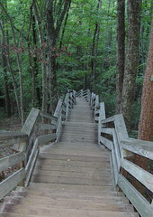 Stairs down into the woods