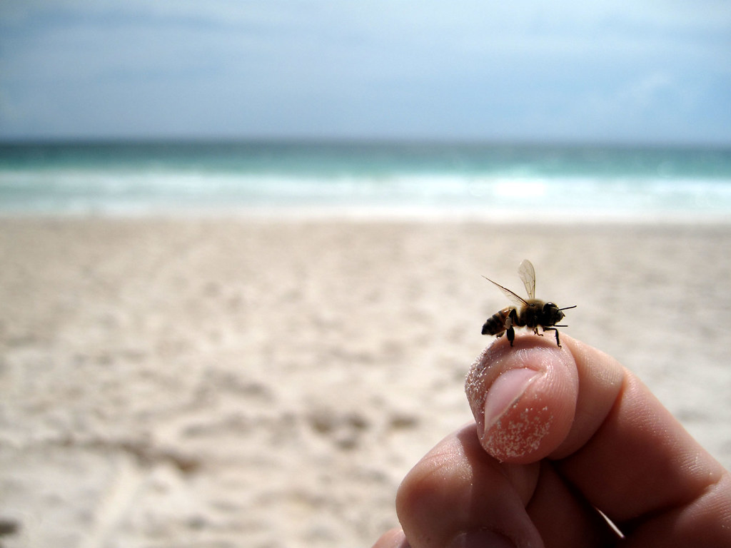 tulum: bee rescue