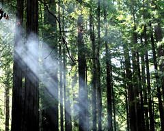 smokey sun rays ((nz)dave) Tags: county trees nature forest landscape outdoors nikon nopeople redwood campground sanmateo memorialpark d300 sigma30mmf14exdchsm lomamar wurrflat