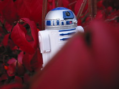 Camouflage Fail! (zJMac) Tags: world park light ontario canada tree leaves clouds standing canon star robot daylight leaf day shadows view action ottawa watching hidden r2d2 figure lonely wars placement figurine droid iamcanadian zjmac