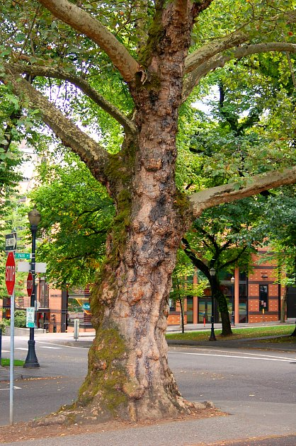 DSC_0047_tree_trunk