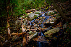 i love streams and playing in them (kristina k. dymond) Tags: park philadelphia woods nikon hill d70s chestnut philly fairmont wissahickon phila