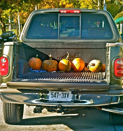bringing home the pumpkins