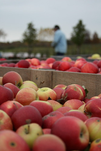 Michigan Apple Orchard