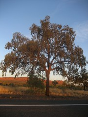 Uluru and around 85 - Sunset near King's Canyon (Ben Beiske) Tags: nationalpark nt australia canyon kings outback australien northern territory watarrka
