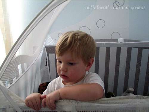 Bear in crib tent