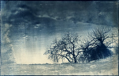 On the otherside (batuda) Tags: trees reflection ice watercolor tea mint d76 om toned ilford cyanotype 5018 altprocess fp4plus sinkunai