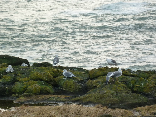 gulls like it