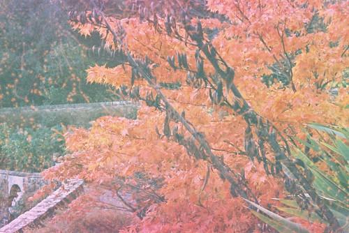 Autumn Overdone