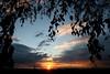 April (pixel-rausch) Tags: sunset sun tree cloudy dusk calendarshot