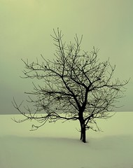 Snow n tree (Signe09) Tags: winter snow lonelytree treeinthesnow nowandtree