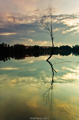 Another Solitary Tree..Again by Arief Rasa