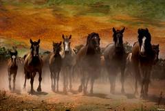 "Wild horses II (pericoterrades) Tags: horses beautiful caballos bravo searchthebest topgun wildhorses elrocío tup rocío almonte salvajes gpc workofart coth potros supershot pericoterrades bej mywinners abigfave omot platinumphoto colorphotoaward visiongroup isawyoufirst firsttheearth ""isawyoufirst"" citrit marimas theunforgettablepictures shutterbox concordians elitephotography theperfectphotographer goldstaraward winnr platinumsuperstar saariysqualitypictures marismeños thedantecircle visionquality100 worldsartgallery redmatrix wildfirewildlife oracoob oracosm flickrvault magicunicornverybest selectbestfavorites selectbestexcellence sacadeyeguas eotexcellence"