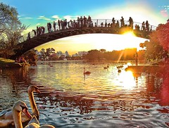 Bridge to the Sun (Jhows) Tags: park bridge parque