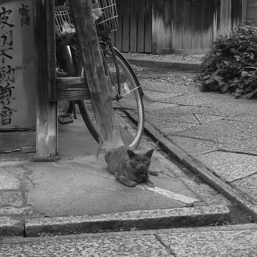 Today's Cat@20090815