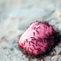 de fresa (retales botijero) Tags: pink gum ant images explore getty chewing hormiga chicle fresa retales botijero