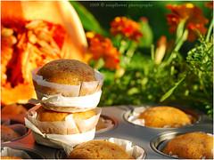 Wrzige Krbis Muffins | Spicy Pumpkin Muffins (Soupflower's Blog) Tags: cooking cake pumpkin ginger muffins baking blog cinnamon sugar flour mehl kuchen backen krbis zucker cloves kochen ingwer nelken muskat zimt soupflower wwwsoupflowercomblog krbismuffins muskatkrbis