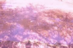 町田樹 画像100