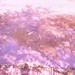 町田樹 画像94