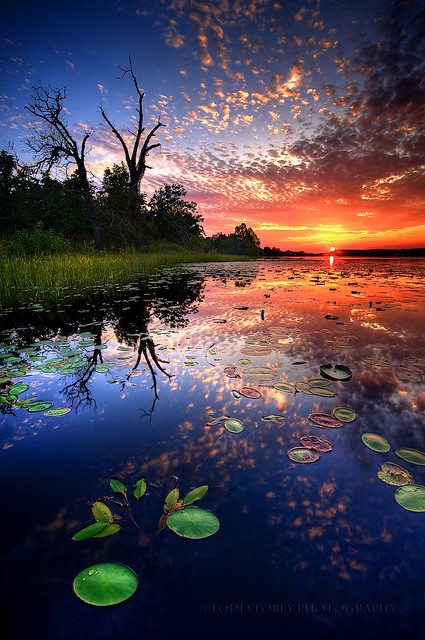 Divna priroda - Page 2 3940294810_3e79129596_z