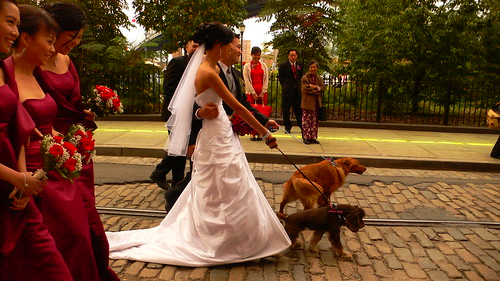 DUMBO wedding goes to the dogs...