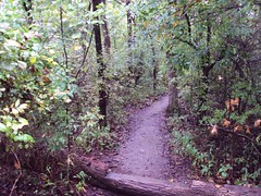 A trail in the woods at Camp Classen