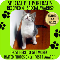AWARDS SPECIAL PET PORTRAITS psd