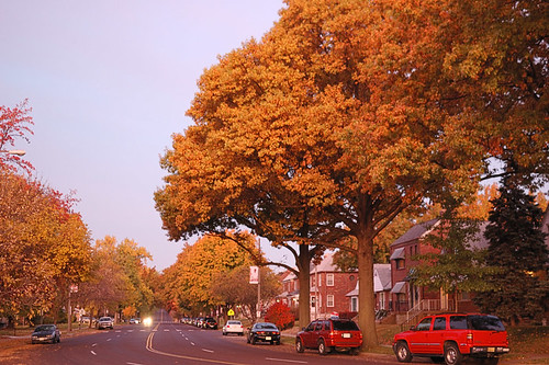 Street at dawn with fall colors