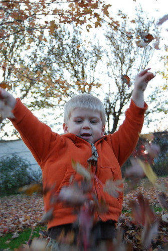 Hooray for leaves!