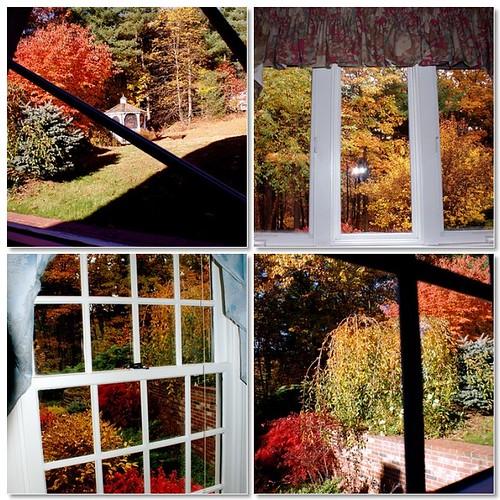 Autumn windows