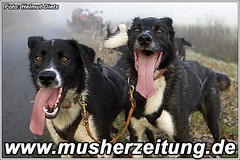 Bernhard Schuchert Schlittenhunde - Training